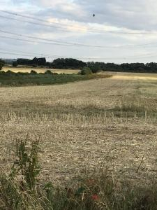 Balloonists get sighting of deer on stubble